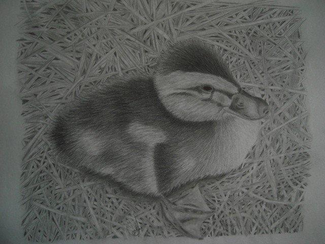 duckling in graphite-aug.-1-10-001.jpg