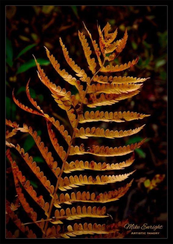 ~ Gold In The Understory ~-dsc00882_fotor.jpg