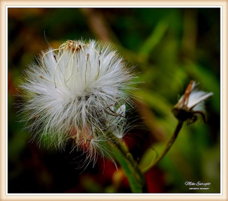 ~ Waiting On The Wind ~-dsc00894_fotor.jpg