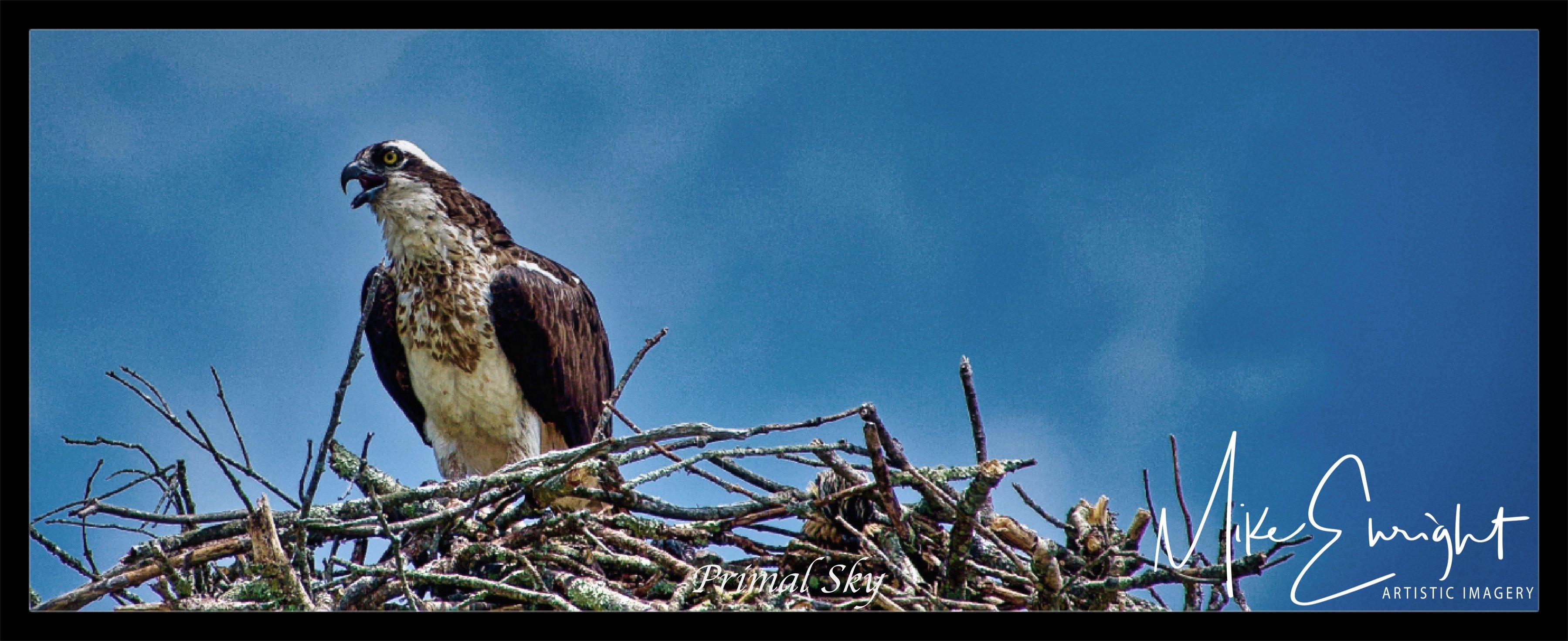Primal Sky ~A photograph.-dsc07358-osprey-nest-guarding_fotor-1.jpg