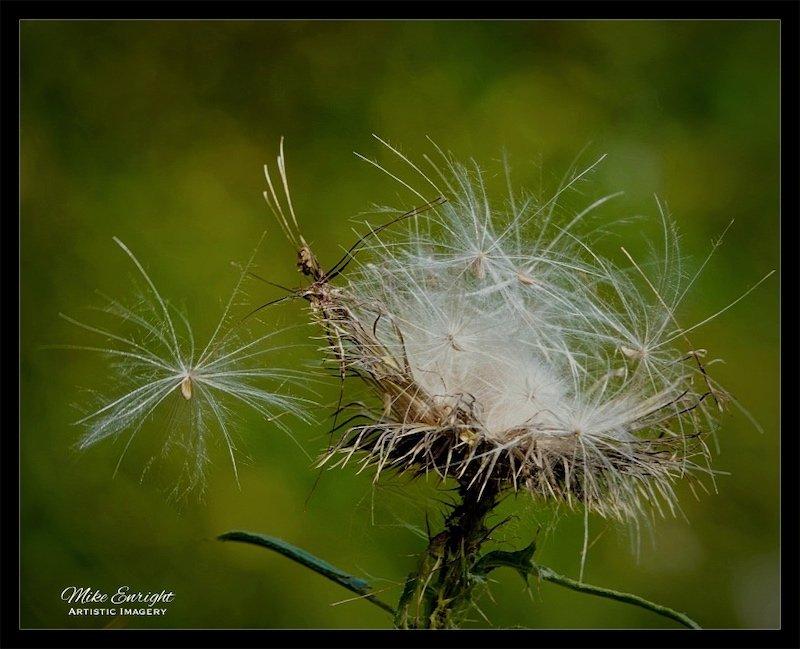 Windswept-etqb1%25v%25ruos%25bhmq%258jaq_thumb_9a43_fotor.jpg