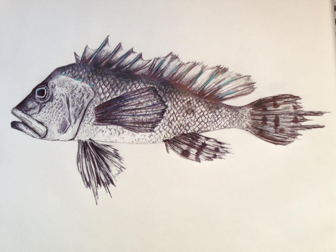 Fish Images Drawings Fish Drawings Image Jpg | 1116 x 837 jpeg 91kB