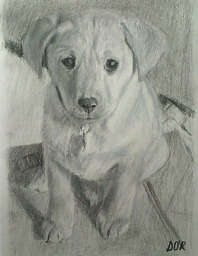 Drawing of a Labrador puppy-puppy-cropped.jpg