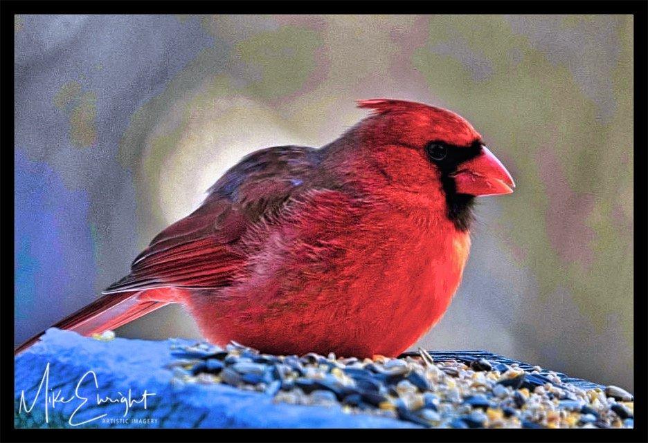 RED DAWN ~ A photograph.-qpjcd5ggstkqruvuqag0ug_thumb_54d3_fotor-1.jpg
